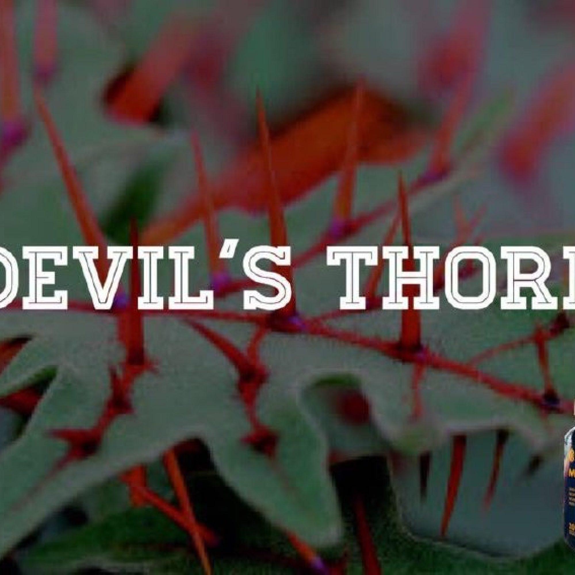 devil's_thorn