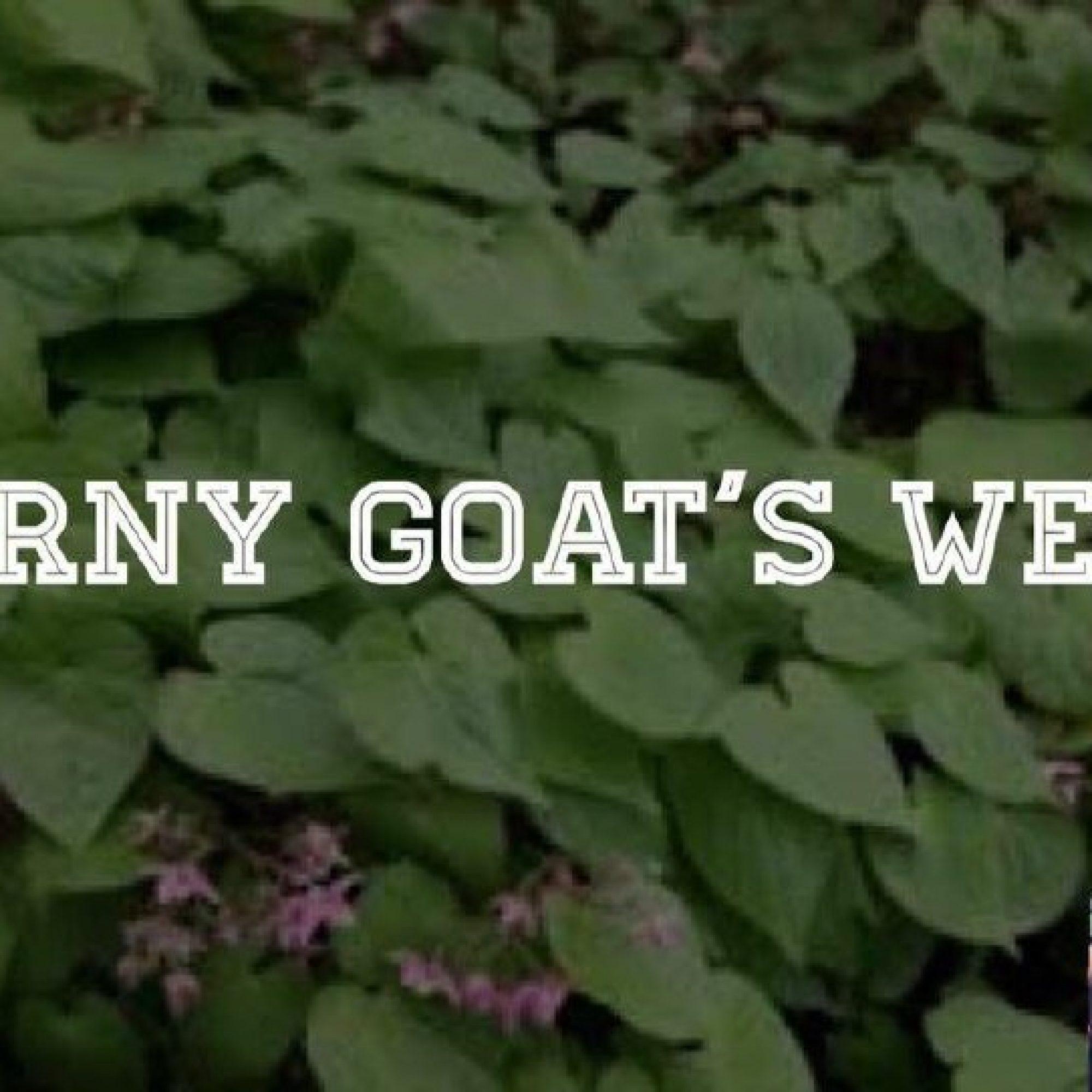 horny_goats